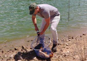 meilleur moment pour pêcher la carpe