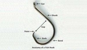 Anatomie de l'hameçon